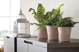 office plant displays. Perfect Office Office Plants Interior Plant Displays 3 To