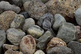 Image result for animal camouflage