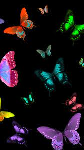 Beautiful Butterfly Wallpaper - HayPic