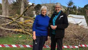 Recent storms have destroyed an ancient family tree planted by Maude Bird  at Strawberry Hill | Albany Advertiser