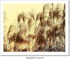 tall grass silhouette. Brilliant Tall Free Art Print Of Silhouette Of Tall Grass To S