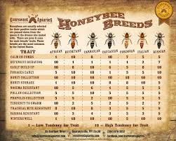 Breeds Of Different Animals On Amazing Charts Bee Keeping