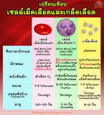 เซลล์เม็ดเลือด VS #เกล็ดเลือด... - Easy biology by DrPukan
