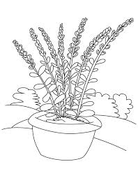 Small Picture Lavender flower pot coloring page Download Free Lavender flower