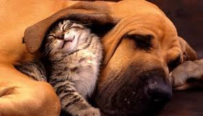 dog and cat love each other. Beautiful Other In Dog And Cat Love Each Other