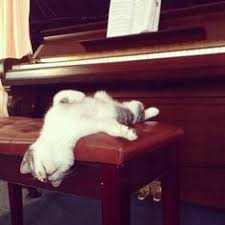 cute kittens sleeping on pianos. Unique Cute White Cat On A Piano  Musical Cats Pinterest White Cats Cat And Animal With Cute Kittens Sleeping On Pianos T