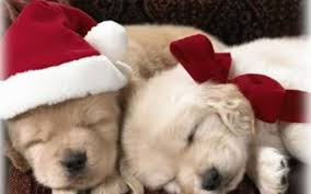 cute christmas puppies. Unique Cute Puppies Images Christmas Puppy HD Wallpaper And Background Photos Inside Cute N