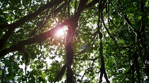 Is Average Tree Lifespan A Meaningful Number Deeproot Blog
