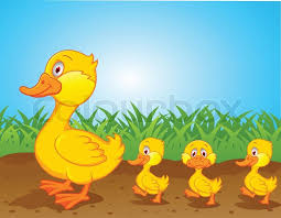 Image result for duck family