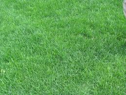 wild grass texture. Grass Texture By DeathlyRain Wild