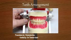 Teeth Setting Principles Of Teeth Arrangement And Compensatory Curves