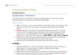 sleep and biological rhythms revision a level psychology document image preview