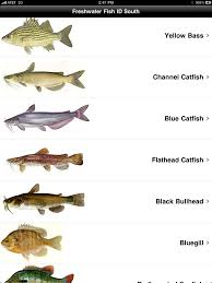 Bass Species Chart Freshwater Bass Species Chart Images Pictures Becuo