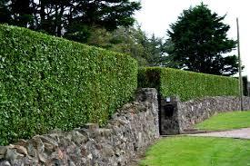garden maintenance service. Plain Garden Garden Maintenance Services Baldoyle And Service