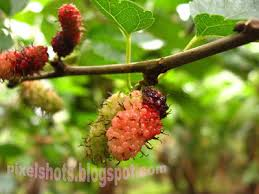 10 Fruit Bearing Trees For Your Home Garden  Fruit Bearing Trees Kerala Fruit Trees