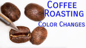 When you roast beans for longer you don't reduce the amount of caffeine per bean, but you do lose a bit more water due to evaporation and the beans swell up more. Using Sight To Determine Degree Of Roast Sweet Maria S Coffee Library