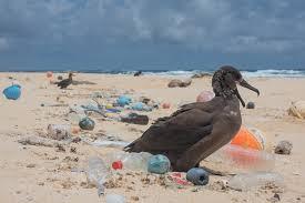 Resultado de imagen de isla de plastico