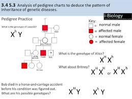 Ib Biology 3 4 Inheritance