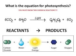 thus photosynthesis can be represented as carbon dioxide water light energy glucose oxygen if you limiting factors of photosynthesis isabel wanted a more