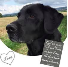 Hundezitate Schöne Hundesprüche Zitate über Hunde