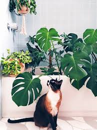 these 8 indoor plants are safe for pets and will spruce up your space