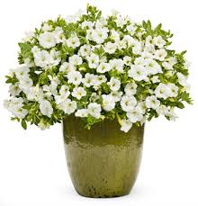 Flower Pots With Flowers Png Flower pot pla - Flower Pot PNG