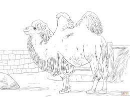 Small Picture Coloring Pages Animals Camel Coloring Page Pictures Camel