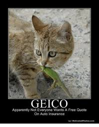 appaly grumpy cat and free geico appaly not everyone wants a free quote