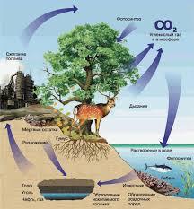 Роль живых организмов в биосфере Биология Общая биология  Роль живых организмов в биосфере