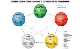 The Physical And Emotional Connections Of The Five Vital