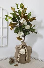 pet sympathy magnolia gift tree