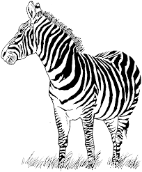 endorsed zebra coloring picture wonderful sheets free printable pages for kids 4695