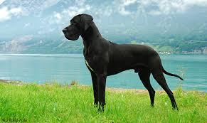 Η Αγία Μαρίνα και ο μαύρος σκύλος...