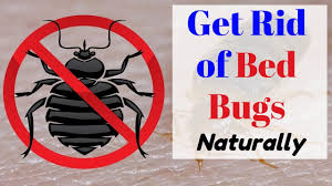 Natural ways to get rid of bed bugs fast - YouTube