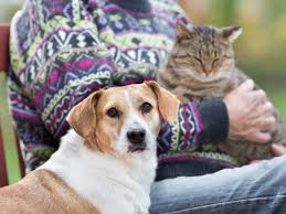 Dog Best Friend Quotes Extraordinary Which Is Smarter Cats Or Dogs Dog Brains Have More Cortical