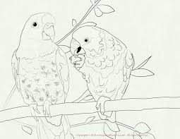 advice printable pictures of birds to color elegant excellent bird