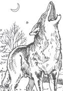 Small Picture Coyote Coloring Page wwwbtnwildlifeorg Crafty Critters DIY