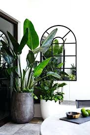 tall indoor plant pots full size of large indoor plants ideas on big indoor cozy extra