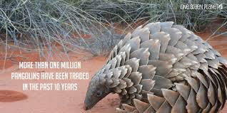 shocking facts about how the illegal wildlife trade drives 10 shocking facts about how the illegal wildlife trade drives species extinction