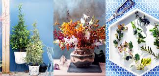 Tuinplant Woonplant November Praxis Blog