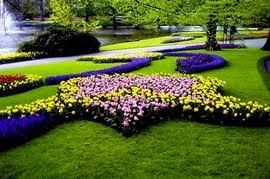 ОЗЕЛЕНЕНИЯ и ландшафтный дизайн Реферат Озеленения и  Ковровая клумба это способ высаживания карликовых растений с цветной листвой в результате которого образуются сложные узоры напоминающие орнамент