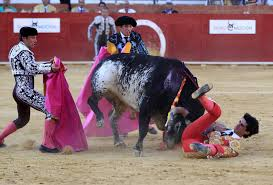 bull fighting injuries. Delighful Fighting On Saturday Afternoon In Teruel A Town Located The Eastern Spanish  Region Of Aragn To Bull Fighting Injuries F