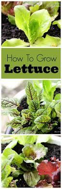 254 best PatioGardenIdeas images on Pinterest   Gardening tips ...