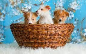 Cute Dog Wallpaper Ipad Pro - 2560x1600 ...