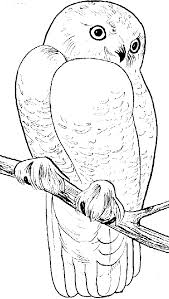 Snowy Owl Coloring Page Animals Town Animals Color Sheet Snowy