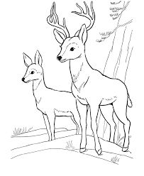 Deer Coloring Page Wild Animal Buck Deer Coloring Pages And Kids