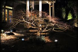 japanese outdoor lighting. Beautiful Landscape Lighting Accent Shot Of This Mature Lace Leaf Japanese Maple By Outdoor Advantage T