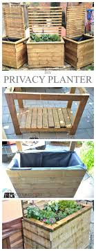 46 Best Privacy Plants Images On Pinterest Landscaping Privacy