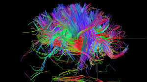build a complete wiring diagram of the human brain good news build a complete wiring diagram of the human brain