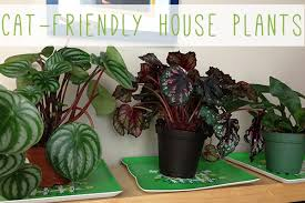 Awesome House Plants That Are Not Poisonous To Cats Contemporary